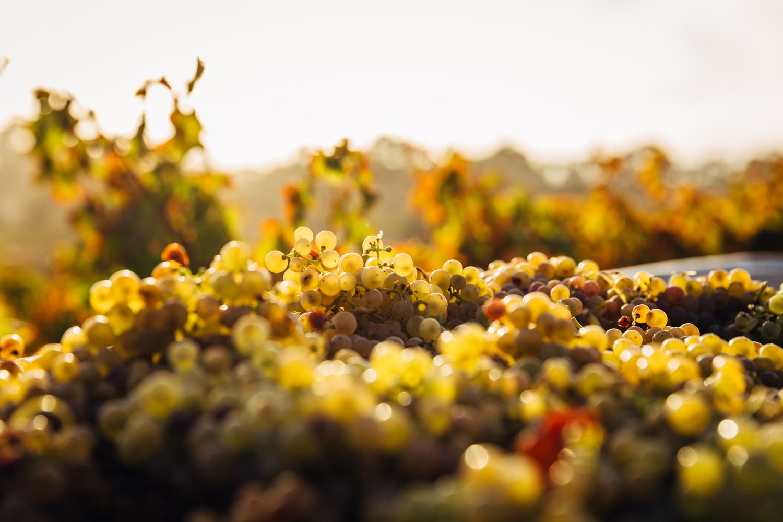 Conservar frutas uvas